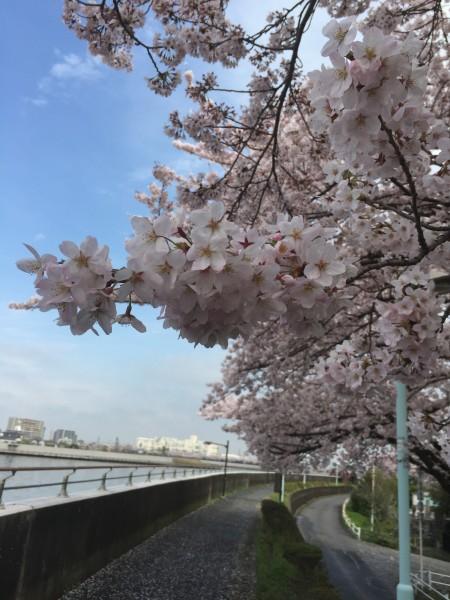 Photo Apr 04, 12 36 40 PM