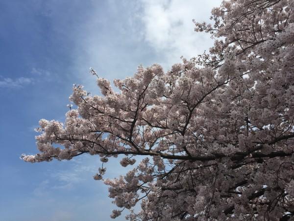 Photo Apr 04, 12 37 11 PM