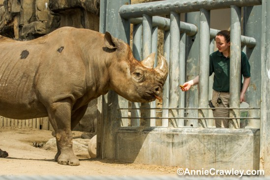 Zoo Scientists to the Rescue photo