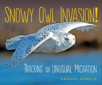 Snowy Owl Invasion!