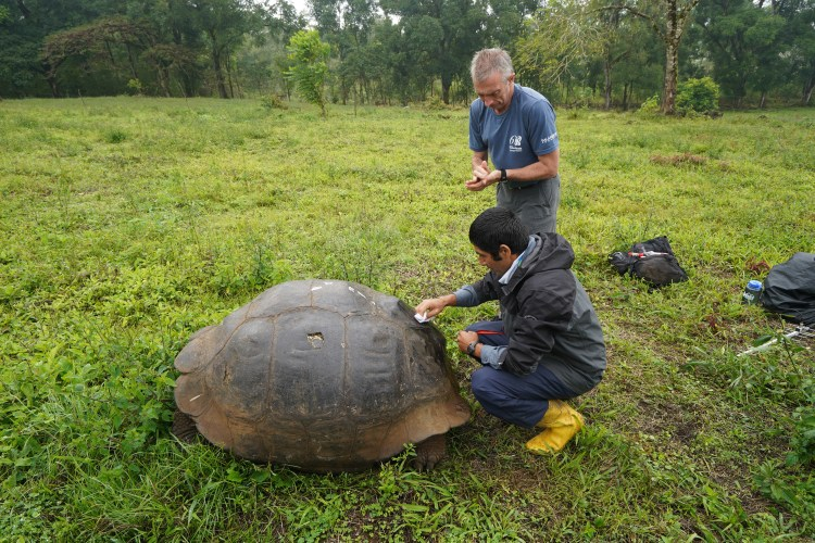 Tagging a tortoise.
