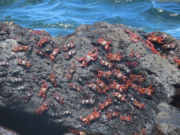 Crabs scuttling over rocks.
