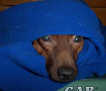 December 31, 2004:  All bundled up with no where to go.