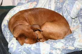 March 4, 2005: Boing resting from hard day of sleeping.