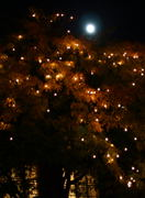 Oct 27, 2004 - a tree with lights on it in a courtyard in the  Market along with the moon.