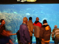 People checking out the St. Laurence Marine Ecosystem.  An  impressive collection of fish!