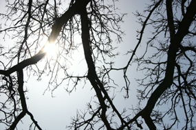 Seeing the sun interact with trees always catches my eye.