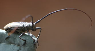 A long horned beetle of some type.  I found it on my jacket when  I took it off and saw it.