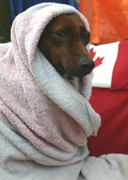 She was shivering, so I wrapped her up.  She doesn't seem too  pleased that I took the picture, though.