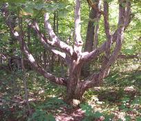 A neat tree.