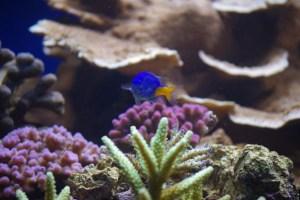 bel aquarium recifal 7342