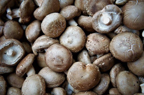 Shiitake mushroom champignon