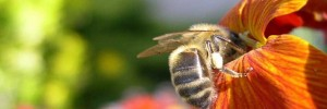 003-abeille-couverture-facebook-timeline