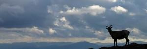 Couverture Facebook Antilope dans la montagne