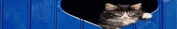 chat-dans-coeur-photo-de-couverture-journal-facebook
