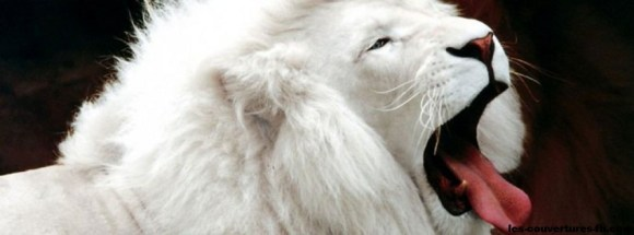 lion blanc-Photo de couverture journal Facebook