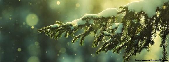 Branche de sapin enneigée - Photo de couverture journal Facebook
