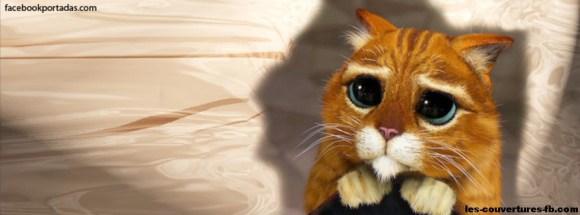 Le chat potté-photo de couverture journal facebook