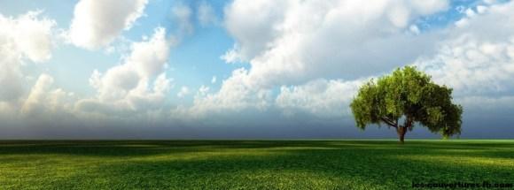 arbre dans la prairie-photo de couverture journal facebook