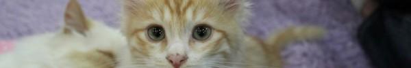 chaton mignon-photo de couverture journal facebook