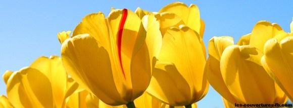 tulipe-photo de couverture journal facebook