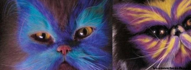 chats décorés-photo de couverture journal facebook