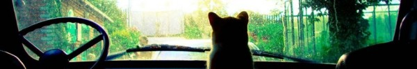 le chat devant -Photo de couverture journal Facebook