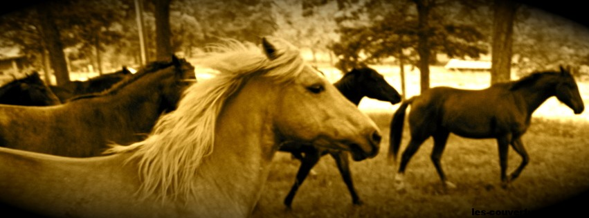 chevaux sauvages photo de couverture facebook. Black Bedroom Furniture Sets. Home Design Ideas