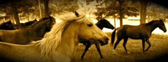 chevaux-photo de couverture journal facebook