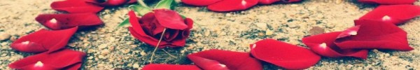 pétales de rose -Photo de couverture journal Facebook