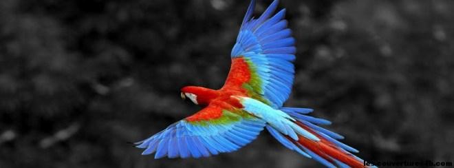 parrot coloré -Photo de couverture journal Facebook