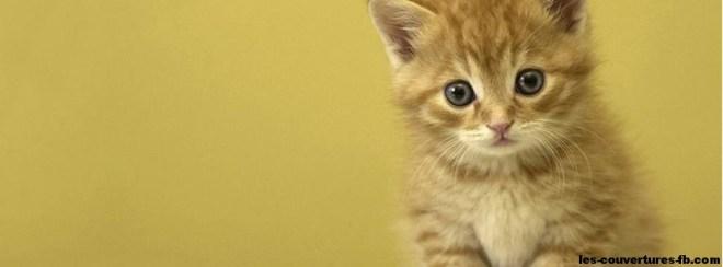 Bébé chat blond Photo de couverture Facebook