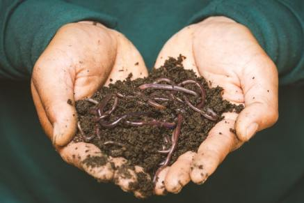 Compost avec vers