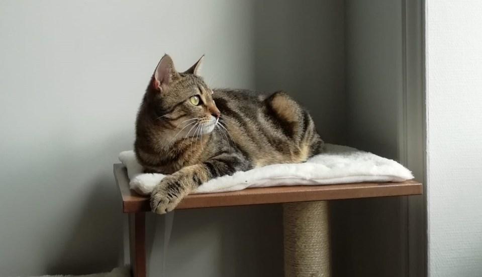 La litière végétale pour chats : vraiment écologique ?