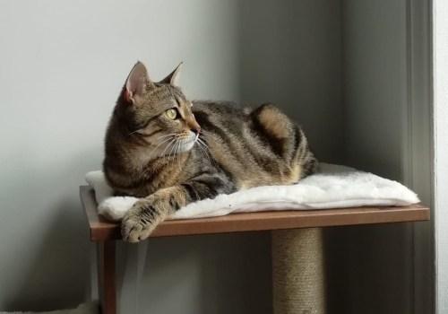 Chat sur arbre à chat