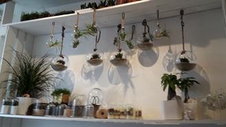 entourees-de-belles-plantes