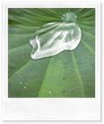 vert-eau-les-filles-du-thé