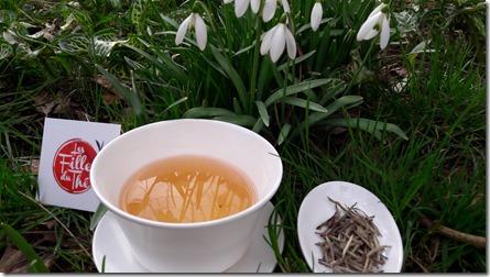 Le Thé blanc, comment profiter de toutes ses subtilités ?