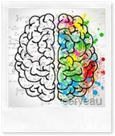 cerveau-michel-cymes-the-vert