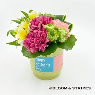 ブルーム&ストライプス,スタイリッシュアレンジメント(M),生花のアレンジメント,BLOOM & STRIPES,母の日,2020,