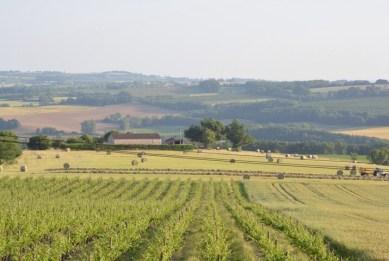 Les Vignes par St.Loup