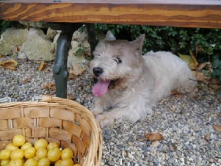 les prunes avec Bcchus