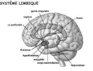 Présentation du système limbique
