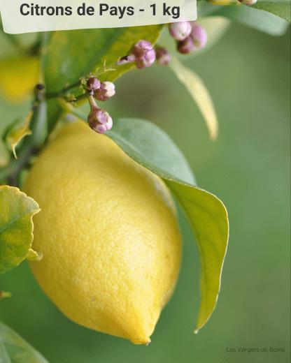 Citron du Pays de Menton - LES VERGERS DE BOIRIE à Menton