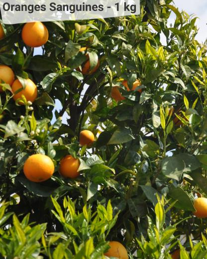 Orange Sanguine - VERGERS DE BOIRIE A MENTON
