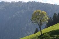 flachsblog_eranger_lesachtal02