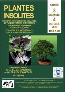 Plantes isolites