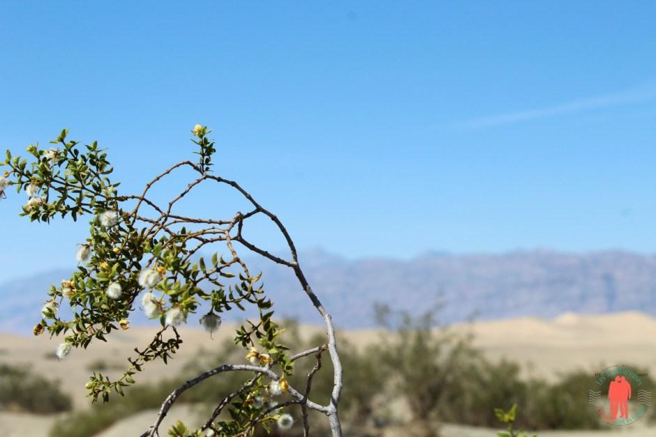 Fleurs Death Valley