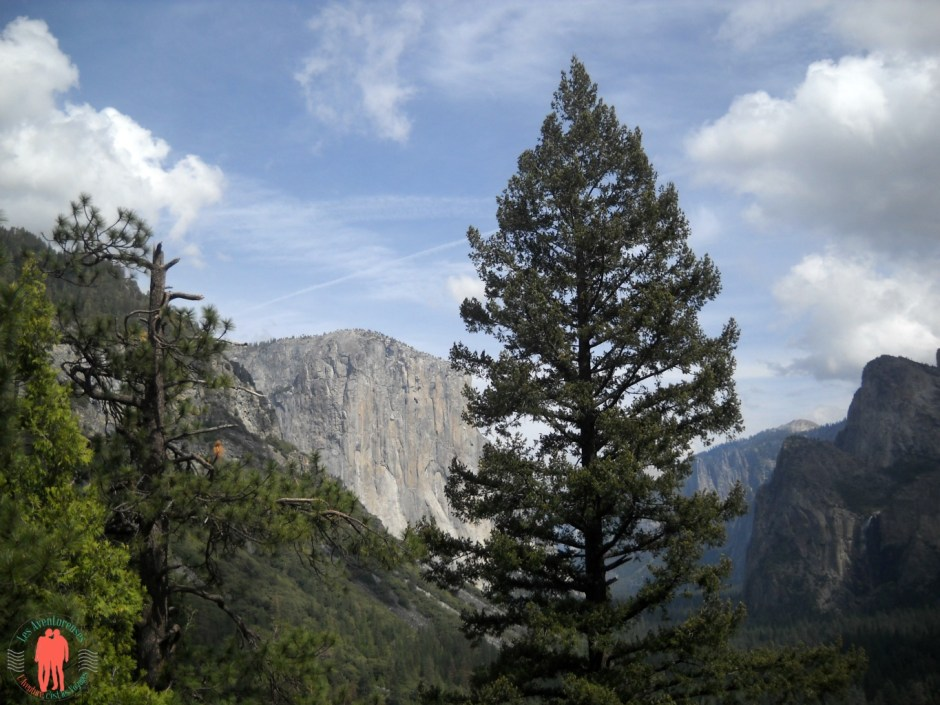 L'arbre du milieu, Yosemite