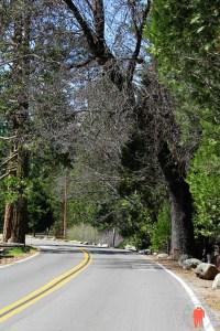 Route dans le parc yosemite